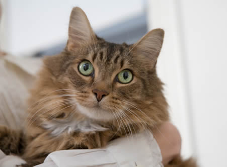Pet Friendly Apartments in West Palm Beach, FL cat_brown
