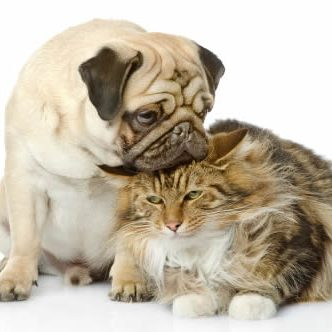 Pet Friendly Apartments in West Palm Beach FL dog_and_cat